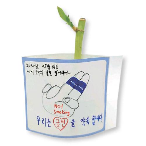 흡연예방 공기정화식물 키우기 개운죽1